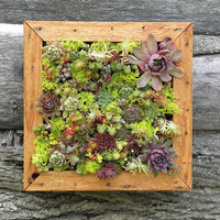 Succulent Vertical Living Wall Art Kit, 12 inch