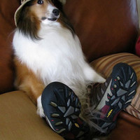Kicked Back Collie ? Funny, Bizarre, Amazing Pictures &amp; Videos