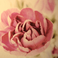 Vintage Pink Stretched Canvas by Shalisa Photography