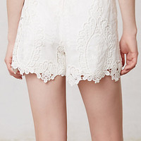 Calvi Lacework Shorts