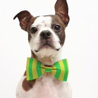 Dog Bow Tie - Whimsical Green Stripe Dr Seuss - Dog Collar Accessories