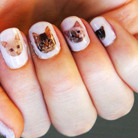 Cat Nail Transfers