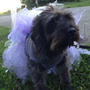 Lavender Glitter Lace Couture Dog Tutu