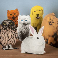 Flat Pack Pets at Firebox.com