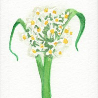 Narcissus birth flower for December original Watercolor floral ACEO | amyelyseneer - ACEO on ArtFire