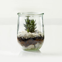 Live Terrarium To Go™, Small Weck Jar