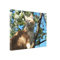 Sahara Cat In A Cherry Tree Wrapped Canvas from Zazzle.com