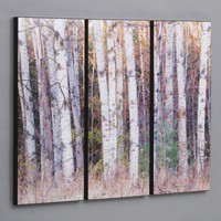 "Wilson Studios Three Piece Birch Trees in the Fall Laminated Framed Wall Art Set - 36"" x 50"" - GW-51 - All Wall Art - Wall Art & Coverings - Decor"