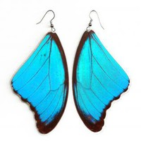 "Real Butterfly Earrings ""Morpho Didius"""