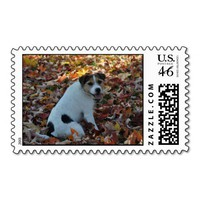 Parson Jack Russell Terrier Postage Stamp from Zazzle.com