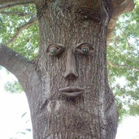 Genuine Tree Peeple Simon Tree Face-108-GTP-HD at The Home Depot
