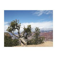Gnarled old Tree at Grand Canyon Canvas Print from Zazzle.com