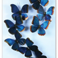 Irridescent Blue Butterflies Wall Art
