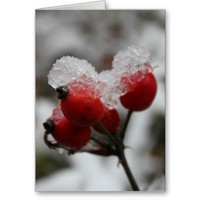Snow-covered Rose Hip Cards from Zazzle.com