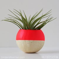Neon Red AIr Plant Pot with Air Plant