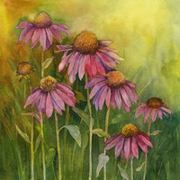 Prairie Coneflower by Jackie Friesth | DecalGirl