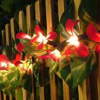 Amazon.com: Red Frangipani Flower Party String Lights (20/set): Home & Kitchen