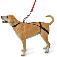 The Canine Tug Preventing Harness - Hammacher Schlemmer