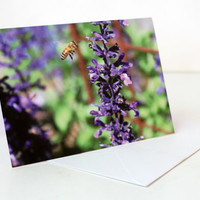 Purple Flower Photo Card, Perennial and Bee Original Photo Greetings Card