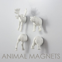 Arctic North American Moose & Bear  - 4 piece set -  Albino Crazy Magnets