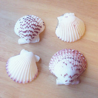 Seashell Hair Clip - Scallop Shell Barrette Beach Hair Accessories Mermaid Hair Accessories Cute Adorable Romantic Elegant Whimsical Dreamy