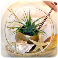 Tillandsia Air Plant Orb - Terrarium Kit - Golden Embrace - Airplant Hanging Glass Globe - Housewarming Wedding Boss Gift 50th Anniversary