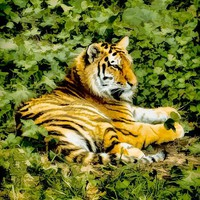 Siberian Tiger Photograph by JT Studios - Siberian Tiger Fine Art Prints and Posters for Sale