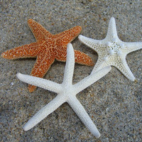 Starfish Hair Clips-Set of 3-Sugar Starfish, Knobby Starfish, Skinny Starfish-Beach Weddings, Mermaids, Style Me Pretty Feature
