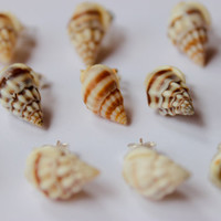 Sea Shell Stud Earrings - Small Ocean Lover Earrings