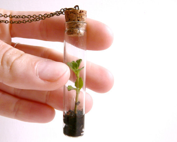Vial necklace terrarium plant green nature by liliFunambule