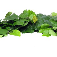 Green Grape Ivy & Small Clusters Garland | Shop Hobby Lobby