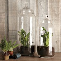 Tall Glass Jars | west elm