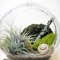 Spiral Air Plant Terrarium by seaandasters on Etsy