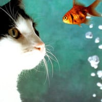 Cat and Fish Print at Art.com