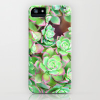 Succulents  iPhone & iPod Case by Lisa Argyropoulos