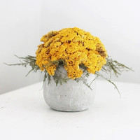 yarrow mound dried flower arrangement by floresdelsol on Etsy