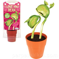 GROW AN I LOVE YOU BEAN KIT