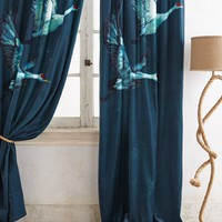 Avian Flight Curtain