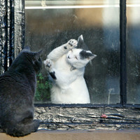 Separated by a Pane of Glass, a White Cat Tries to Play with a Black Cat Photographic Print at Art.com