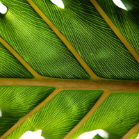 Palm Leaf Photograph, Palm Leaves, Tropical wall Art, Coastal, Seaside, Palm Leaf photograph - Nature home and office décor. Title is: 222