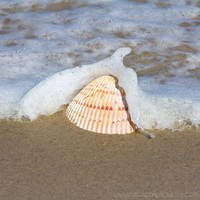 Seashell in wave photograph, cottage beach wall decor, beach photography