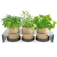 Bamboo Grow Pot at Wrapables - Planters & Seeds