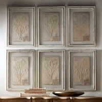 19th C. Framed Herbariums Ivory (Set of 6)