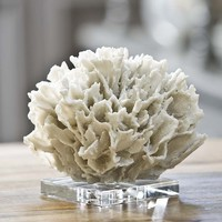 White Ribbon Coral on Crystal Base