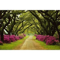 Sam Abell Beautiful Pathway Lined with Trees and Purple Azaleas Photo Poster