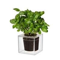 Boskke Cube Clear Plant Pot - PLANTERS - HOME ACCESSORIES