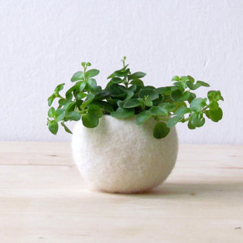 Felt succulent planter / felted bowl / Mini flower vase vase / White for Christmas / place holder