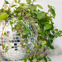 chaparral studio — disco ball planter