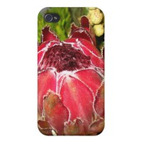 Protea Bouquet Case-Savvy Custom iPhone 4/4S Cover